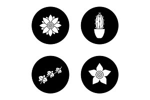 Flowers glyph icons set