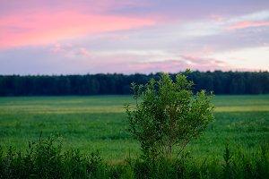 Horizontal sunset bush on field landscape background