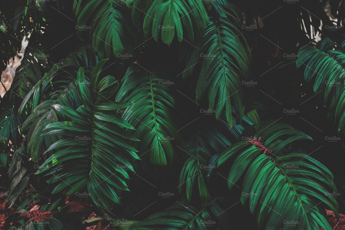 Dark Jungle Leaves ~ Nature Photos ~ Creative Market