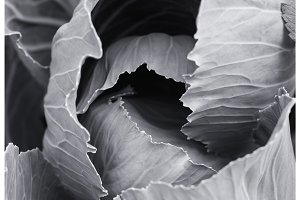 Black and white photo of cabbage. View from above. Abstract composition.