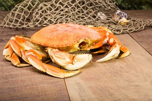 Fresh crab with a net
