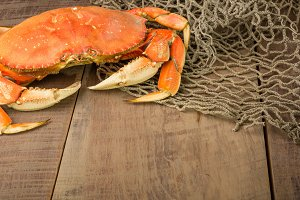 Dungeness crab with net