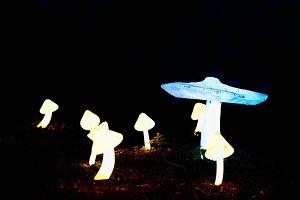 Horizontal psychedelic mushrooms bokeh background
