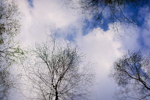 Sky with clouds and trees