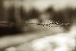 Horizontal prison jail barbed wire background
