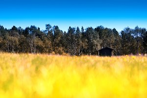 Horizontal grass on autumn field with cottage bokeh background