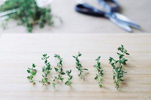 Thyme, Herb Kitchen or Garden Scene