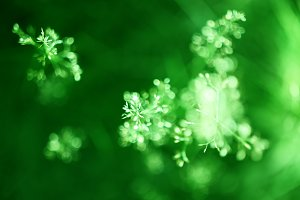 Green plant bokeh background