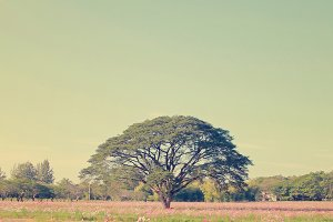 Beautiful tree in flowered field