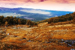 Classic Norway mountain forest landscape background