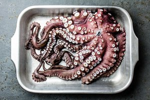 Seafood octopus. Whole fresh raw octopus on gray slate background, top view