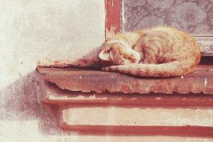the red cat sleeping on summer sun