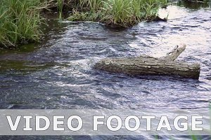 Water stream flows around log in slow motion