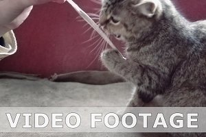 Cute cat plays with string in slow motion