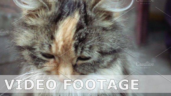 Cute Little Cat Washes Itself In Slow Motion