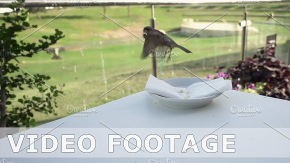 Sparrow Flies And Pecks In Slow Motion