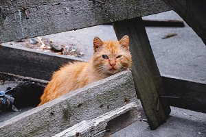 scared red cat looking in the camera