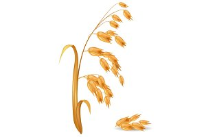 Oat Ear Plant with Pile of Grains Vector Illustration