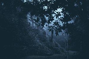 Mystic Dark Jungle