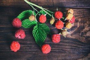 branch of raspberry