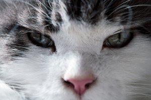 Portrait of a cat close-up.