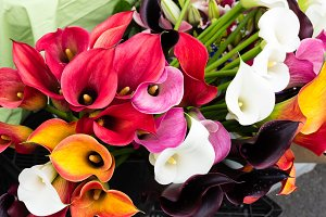 Calla lily flowers at the market