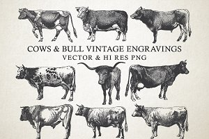 Cow & Bulls Vintage Engraving Vector