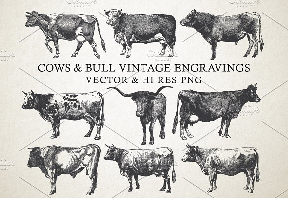 Cow Bulls Vintage Engraving Vector