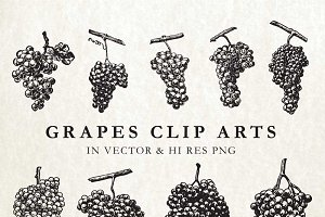 Vintage Grape Engravings Vector Pack