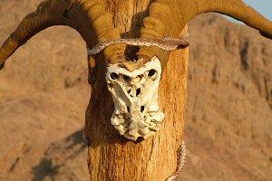 Goat Skull Voodoo
