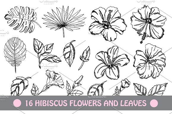 Hibiscus Flowers And Leaves
