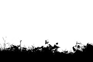 Horizontal black and white grass silhouette illustration backgro