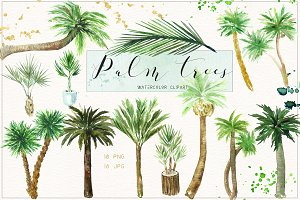 Palm tree. Watercolor clipart.
