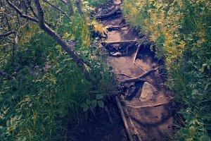 Hiking in Skaftafell National Park