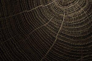 Natural akacia log surface texture