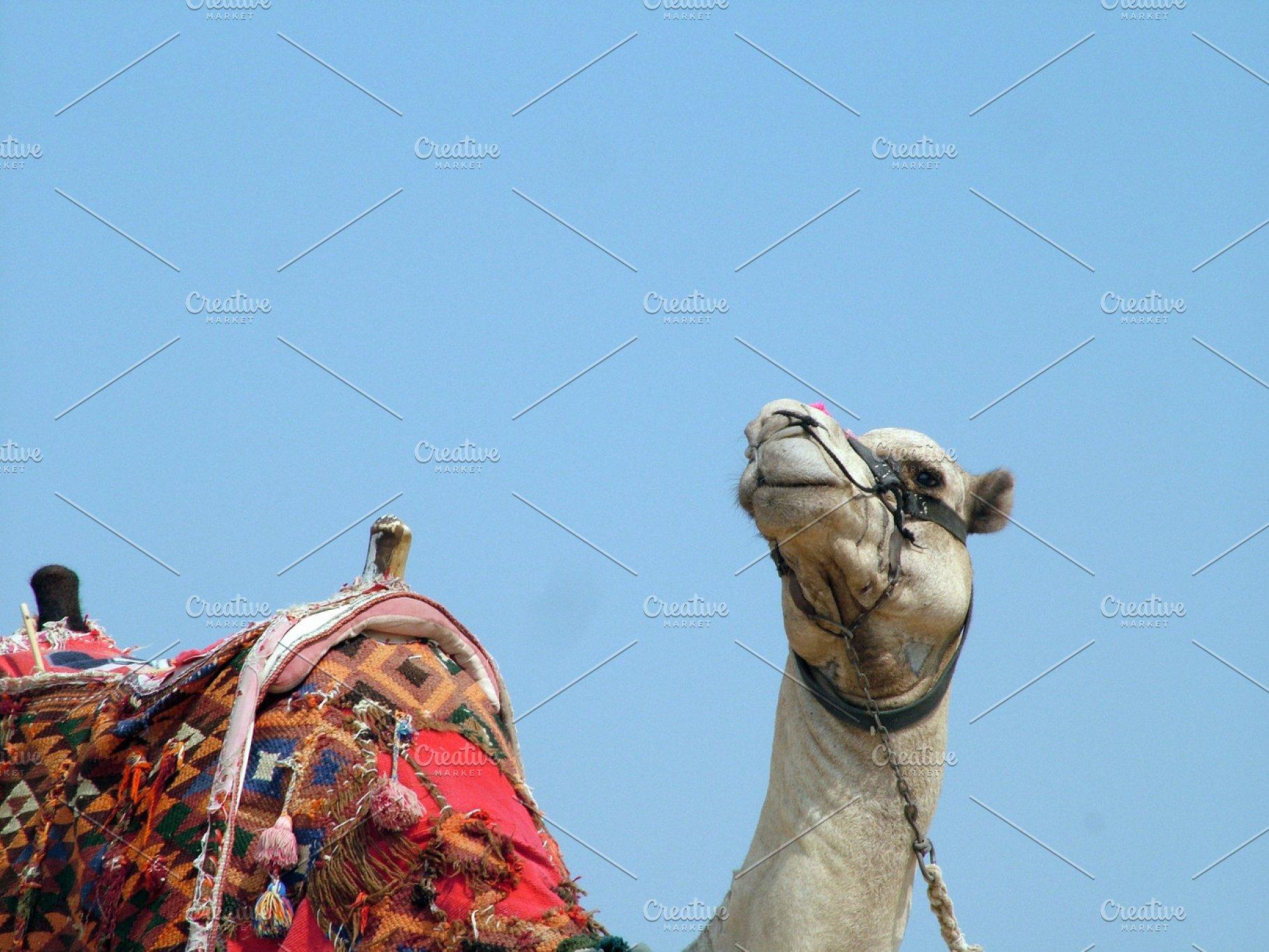 official photos 98e81 17b8e Camel Closeup