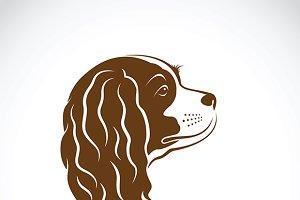 Cavalier King Charles Spaniel dog.