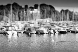 Swimming swan in back of Oslo yacht club bokeh backdrop