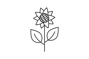 Sunflower, helianthus linear icon