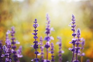 Colourful blue meadow flowers
