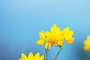 yellow vintage natural flowers