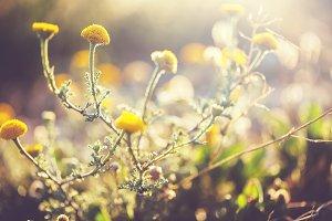 vintage nature meadow wild flowers