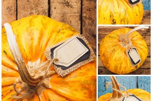 Collage from pumpkins on the wooden background