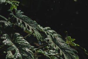 Jungle  leaves in the rain