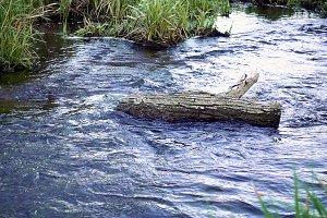 Water stream flows around log