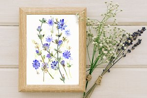 Watercolor Chicory Print