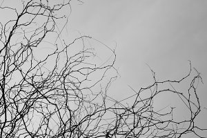 Tree Branches Thorns
