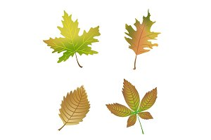 Autumn Leaves. Set of vector illustrations