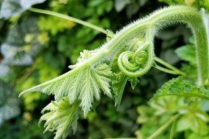 Buds of greenery