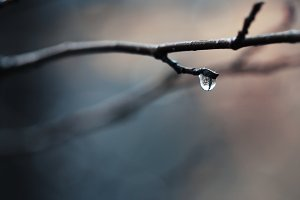 drop of water after rain
